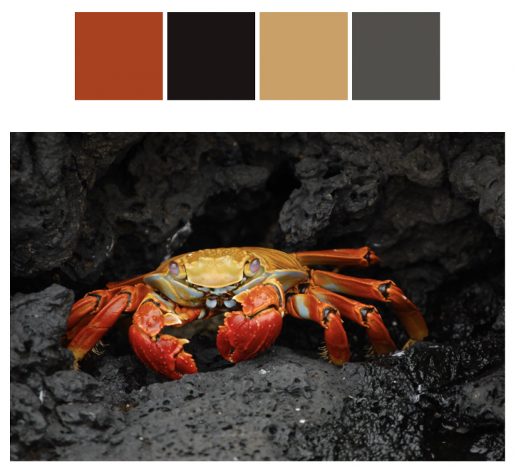 A picture of a crab.
