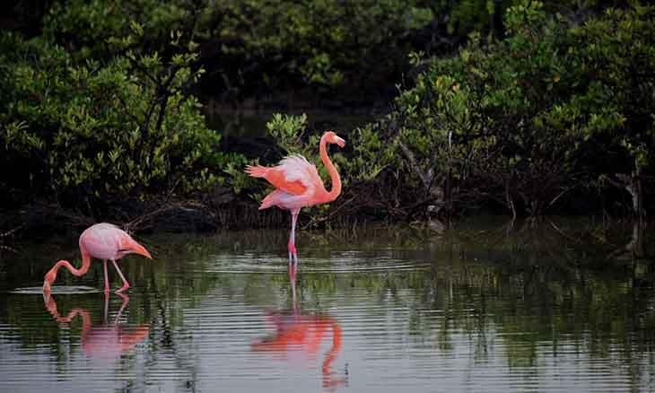 Large flamingos sample