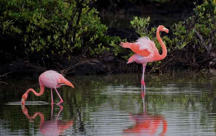 Medium sized flamingos sample, zoomed in