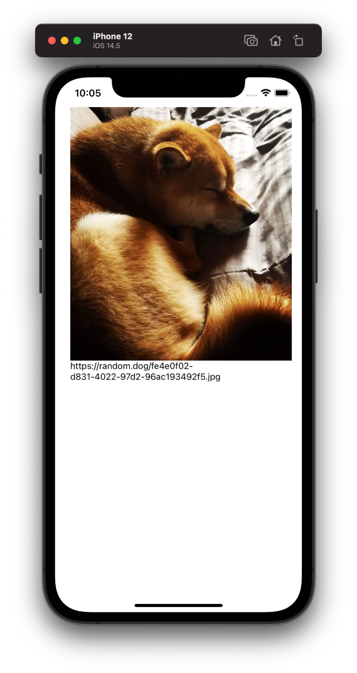 Dog Picture on Device